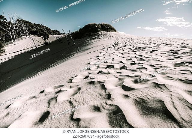 Outback Australia sand dunes under blue sky. Desert near Ocean Beach, Tasmania. Henty Dunes