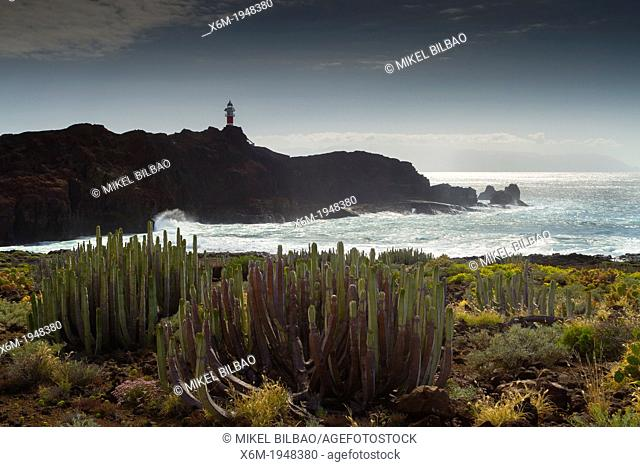 Canary Island spurge (Euphorbia canariensis) and lighthouse in Punta Teno. Tenerife, Canary Islands, Atlantic Ocean, Spain