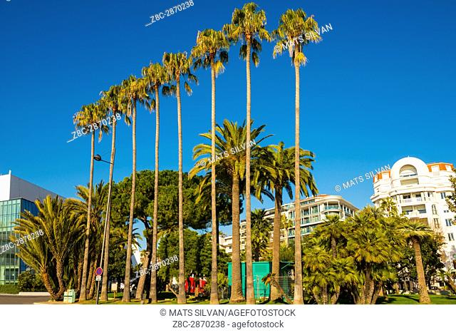 City of Cannes in a Sunny Day with Palm trees in Provence-Alpes-Côte d'Azur, France