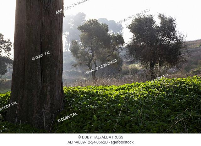 Photograph of a grove in the Lower Galilee
