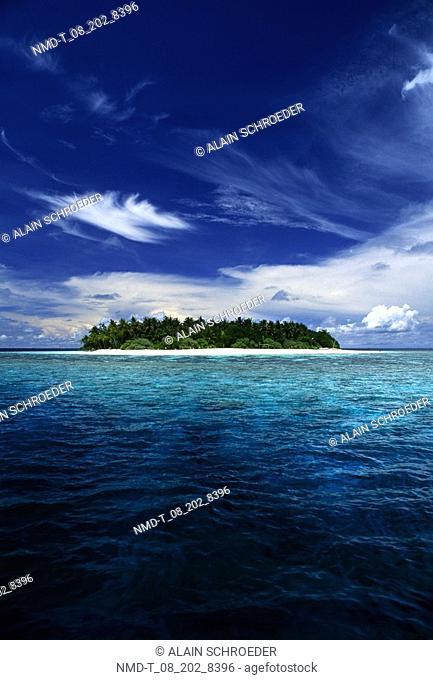 Trees on an island, Maldives