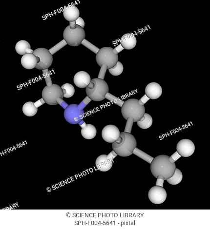 Coniine, molecular model. Neurotoxin disrupting the peripheral nervous system. Found in poison hemlock and the yellow pitcher plant