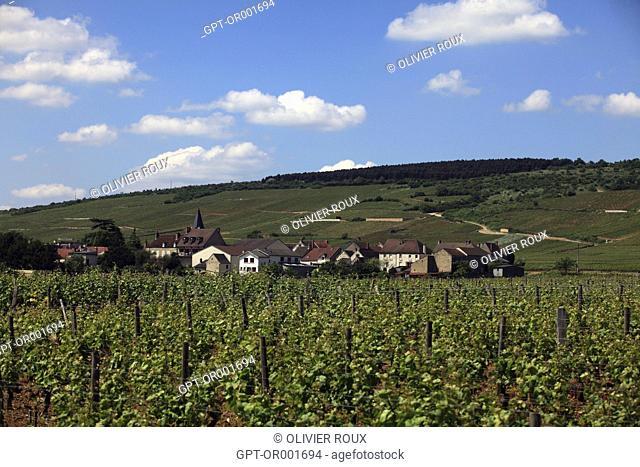 VILLAGE AND VINEYARDS OF VOSNE-ROMANEE, COTE D'OR (21), BOURGOGNE, FRANCE