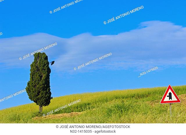 Fields and cypress tree, Tuscany landscape, Val d'Orcia, UNESCO world heritage site, Pienza, Siena Province, Tuscany, Italy