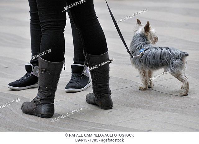 Dog, La Rambla, Barcelona, Catalonia, Spain