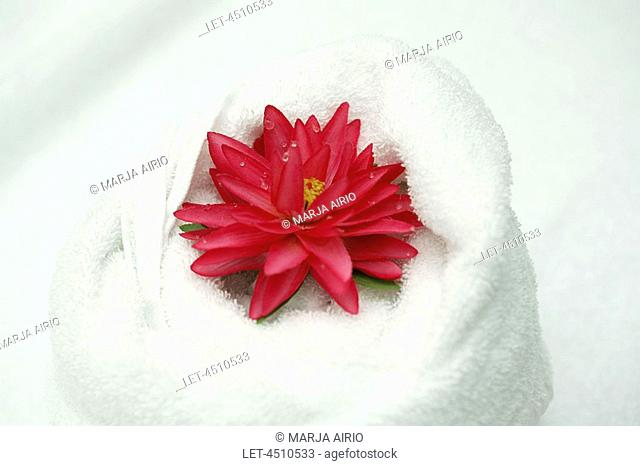 A red water lily and a white towel  Helsinki, Finland