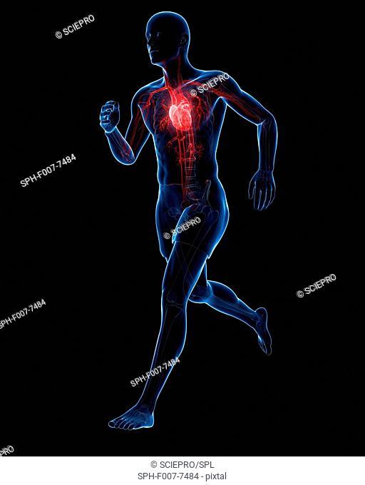 Runners heart, computer artwork
