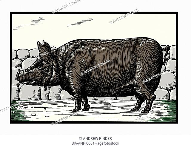 Dark pig against stone wall