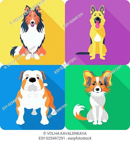 Vector dog Rough collie, Papillon, German shepherd and English Bulldog breed face icon flat design