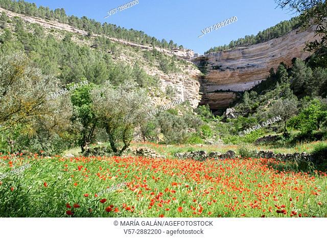 Poppy field and precipices. Hoz del Jucar, Albacete province, Castilla La Mancha, Spain