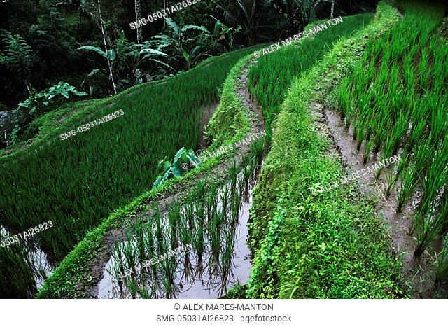 close up of terraced rice paddies