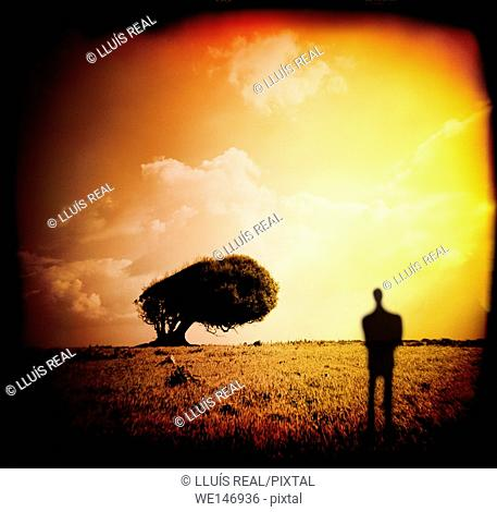 arbol, hombre, paisaje, tree, man, landscape