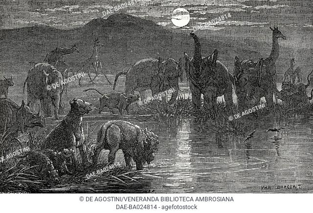 African night, elephants, giraffes and rhinos drinking from a pond, illustration from Il Giornale Illustrato, Year 3, No 5, February 3-10, 1866