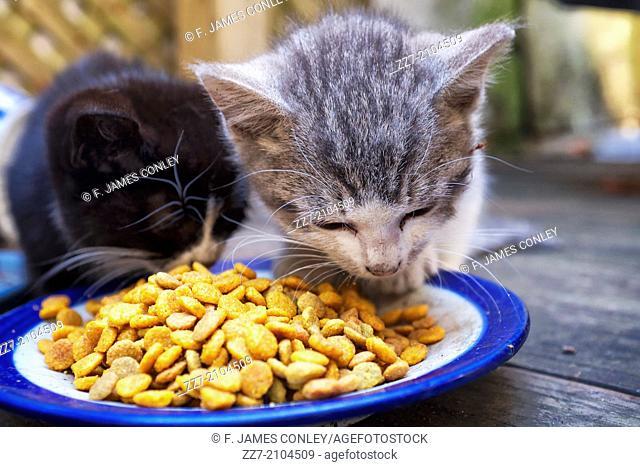Kittens eating