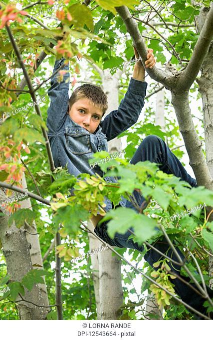 Boy climbing a tree; Salmon Arm, British Columbia, Canada