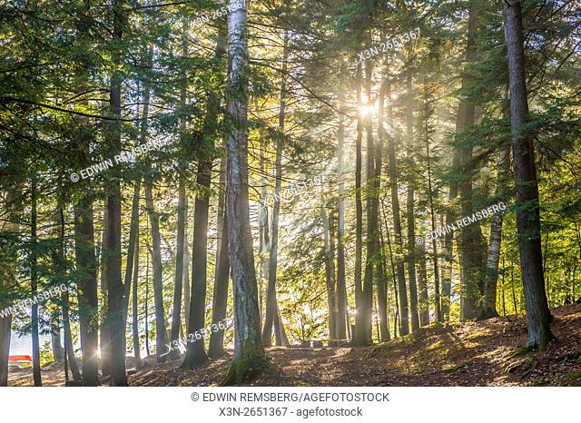Sun shining through trees in the woods at Bryant Pond in Maine