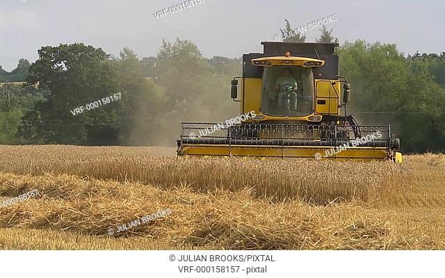 Yellow combine harvester cutting wheat at harvest time - 4:2:2 file