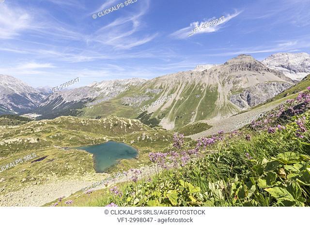 Wildflowers surrounding the alpine lake, Crap Alv Lejets, Albula Pass, canton of Graubünden, Switzerland