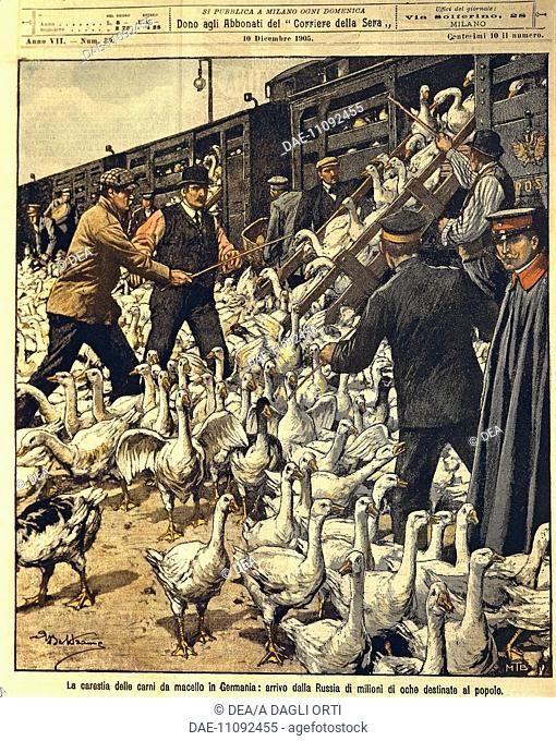 Achille Beltrame (1871-1945), The Domenica del Corriere (Italian Sunday newspaper) from 10th December 1905. The German meat famine: illustration showing train...
