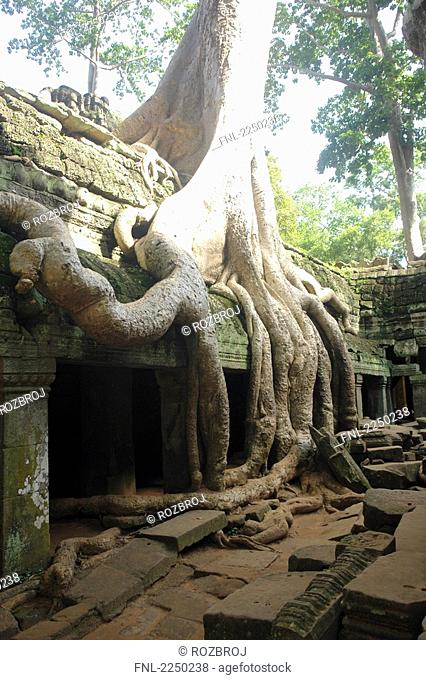Overgrown roots on old ruins, Ta Prohm Temple, Angkor, Cambodia