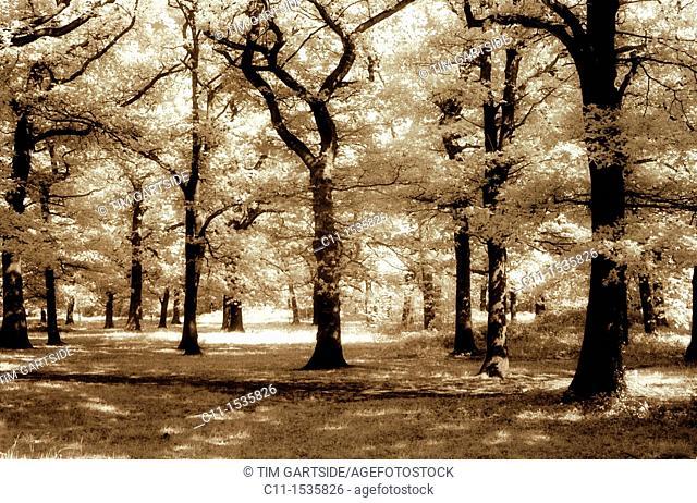 wood beckenham kent london england uk, infra red film effect