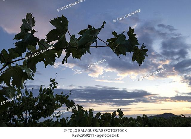 Sunrise over finca (estate) des Cami de Felanitx, Celler Mesquida-Mora, Porreres, Mallorca, Balearic islands, Spain