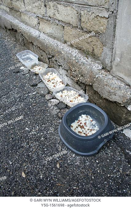 cat food bowls outdoors