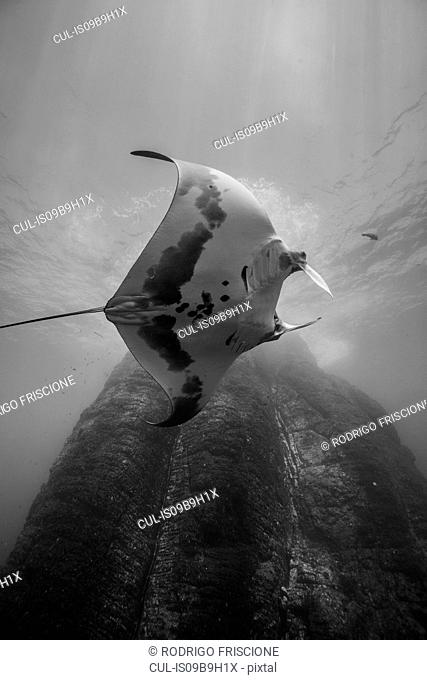 Underwater view of ray fish by rock formation, Revillagigedo, Tamaulipas, Mexico, North America