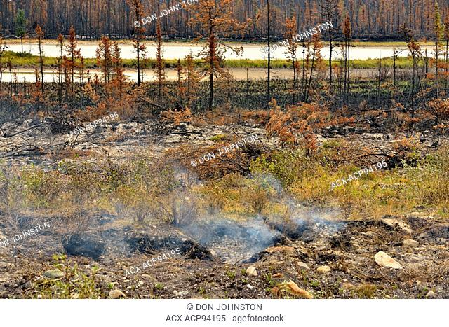 Blackened spruce trees and ash after a recent forest fire, Highway 3 to Yellowknife, Northwest Territories, Canada