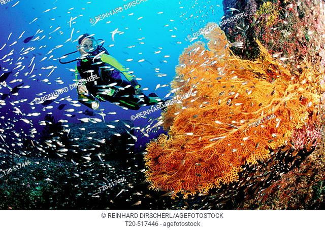 Scuba diver and coral reef. Indian Ocean, Phuket, Similan Islands, Andaman Sea. Thailand