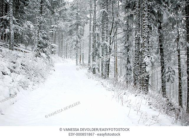 Snow covered forest  Location: France, Vosges