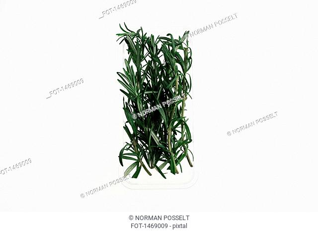 Bunch of rosemary on white background