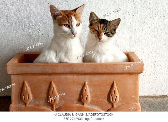 Two sleepy young cats sitting in empty flowerpot