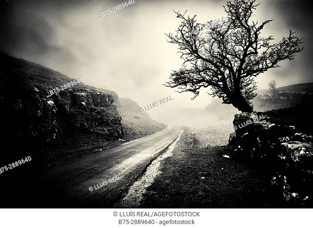 Tree on a foggy day. Settal, Craven, Yorkshire Dales, North Yorkshire, England