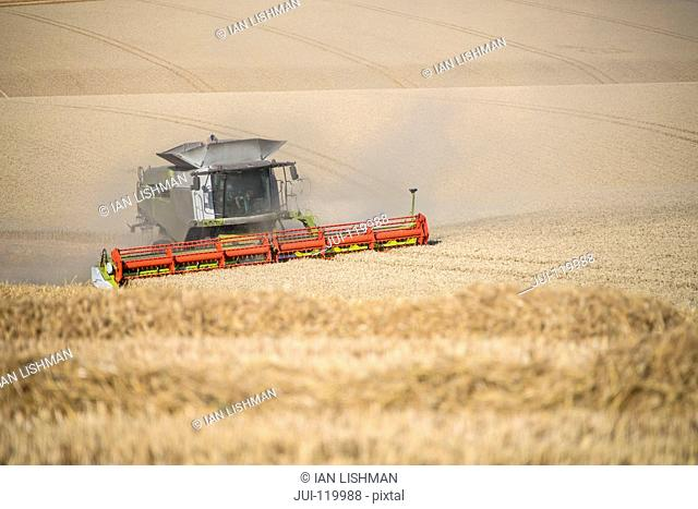 Harvest view of combine harvester cutting summer wheat field crop on farm