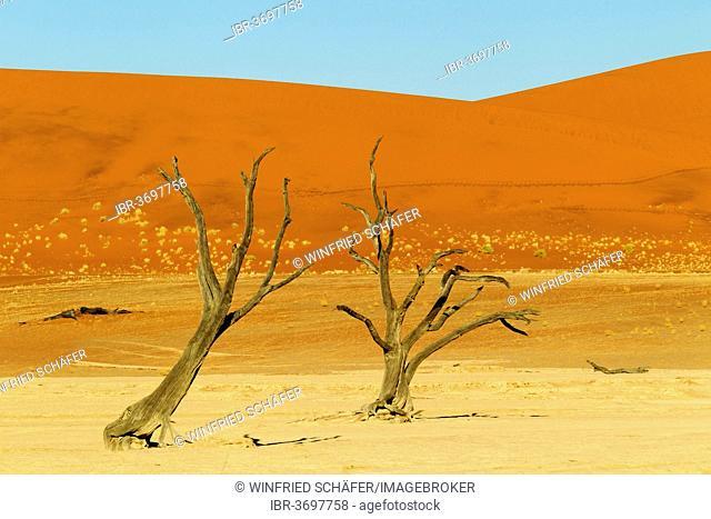 Dead trees, Sossusvlei, Namib Desert, Namib Naukluft Park, Namibia