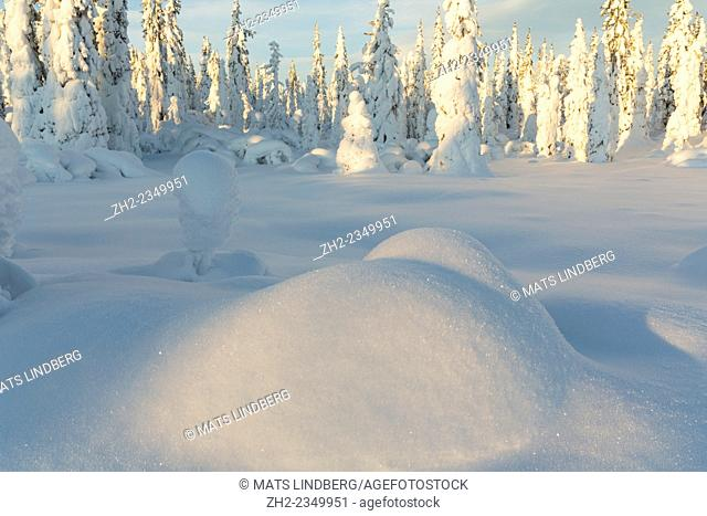 Beautifully winter landscape with plenty of snow and snow on the trees, Gällivare Sweden