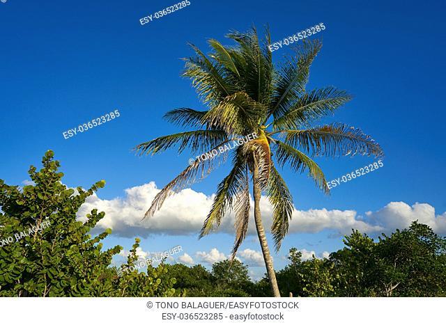 Holbox island palm tree beach tropical in Mexico