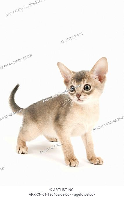 A kitten with round eyes