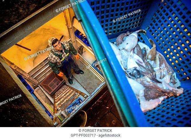 BRINGING THE MONKFISH DOWN TO STORE IN THE REFRIGERATORS, SEA FISHING ON A SHRIMP TRAWLER 'QUENTIN-GREGOIRE' OFF THE COAST OF SABLES-D'OLONNE, (85) VENDEE