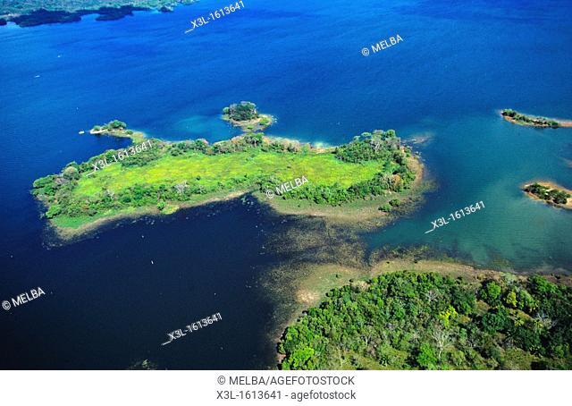 Iguana  Chagres National Park  Alajuela lake  Panama