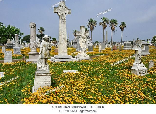 Gaillardia pulchella et Coreopsis flowerbed in the historic City Cemetery, Galveston island, Gulf of Mexico, Texas, United States of America, North America