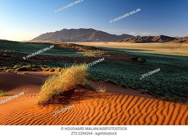 Landscape photo of a green desert valley after plentiful rains. Namib Rand, Namibia