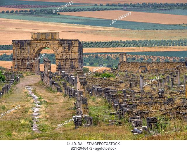 Morocco, Meknes,  the roman ruins of Volubilis