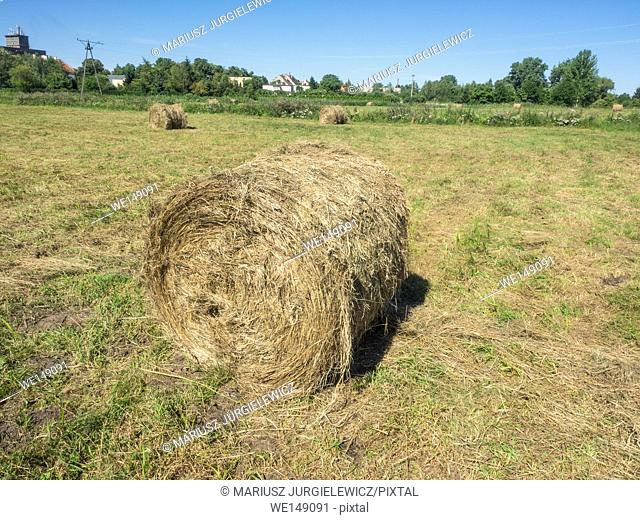Round bales are harder to handle than square bales but compress the hay more tightly