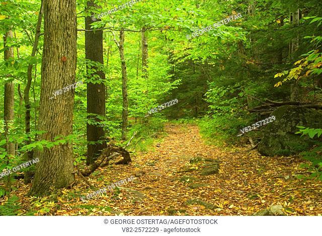 Devil's Path, Indian Head Wilderness Area, Catskill Forest Preserve, New York