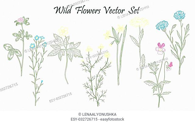 Hand drawn Wild Flowers set of vector sketches