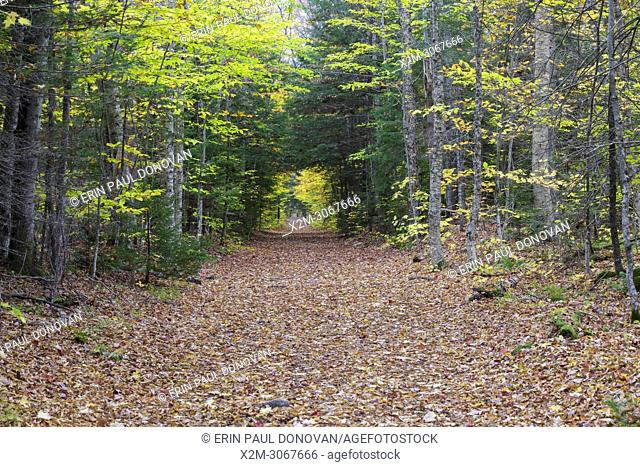 Lincoln Woods Trail in Lincoln, New Hampshire during the autumn months. This trail follows the old East Branch & Lincoln Railroad bed