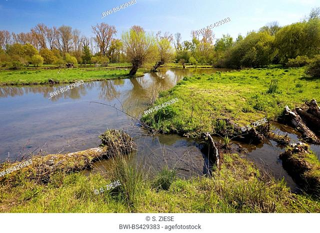 floodplain landscape of the Erft with pollarded willow in spring, museum island Hombroich, Germany, North Rhine-Westphalia, Lower Rhine, Neuss