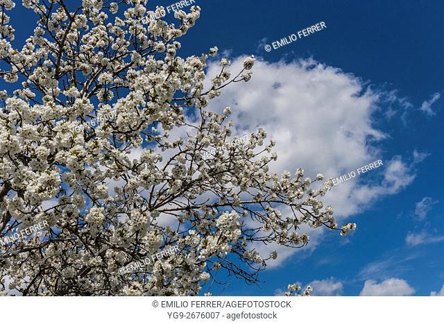 Flowers on a tree in Spring bloom season